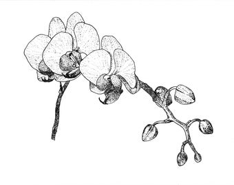 Greeting Card, Flower Card, Blank Card, Floral Card, Orchid Card, Pen and Ink Drawing, Orchid Drawing, Orchid, Flower, Blank Greeting Card
