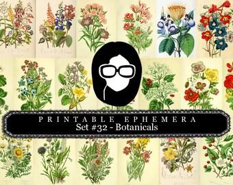 Botanical Print Set Ephemera Pack - Printable Ephemera Set #32 - 13 Page Instant Download, journaling kit, journal cards, journaling card