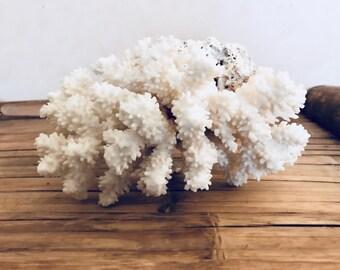Coral vintage - Curiosity Cabinet