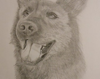 Pencil Sketching of your Pet 8x10