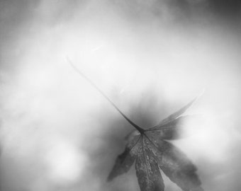 """black and white photography, falling leaf, autumn, monochromatic wall art - 24x36, 20x24, 16x20, 11x14 or 8x10 photograph, """"Wind and Change"""""""