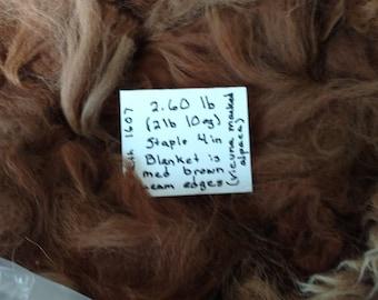 Raw Alpaca Fiber - Medium Brown  2 lb 10 oz   4 inch staple length