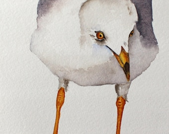 Seagull original watercolor bird art by Betty Moore