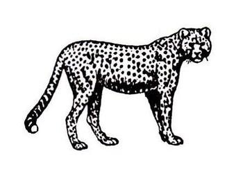 CHEETAH unmounted African rubber stamp, wild animal, big cat, Africa Safari, Sweet Grass Stamps No.17