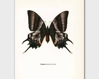 """Butterfly Art Print (1960s Dorm Decor, Green Butterfly Wall Art) --- """"Hope Swallowtail"""" No. 86-1"""