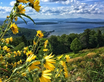 Height of Land Wildflowers - Rangeley, Maine - Photography