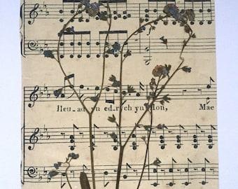 Dried Flower Art, Botanical Decor, Vintage Art, Foliage Art, Vintage Decor, Flower Art, Sheet Music Paper Art, One of a Kind, Flower Decor