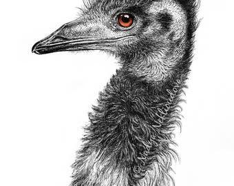 Australian Emu - Bird Fine Art print - Giclee Reproduction of Pen Ink Drawing, wildlife art, nature decor, Australian Art, black and white