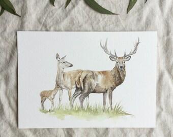 A5 Deer Family