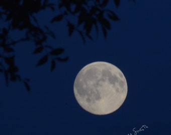 Blue Moon, July Full Moon photo, moon phase photograph, dark blue night sky picture with tree branch sillhouette