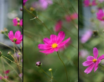Digital stock photo image pack pink summer flowers nature instant download free usage 3 pcs lot