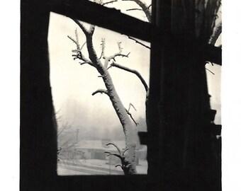 "Vintage Snapshot ""Looking In"" Dramatic Abstract Photo Barren Tree Limb Seen Through Window Black & White Small Mini-Photo Found Vernacular"