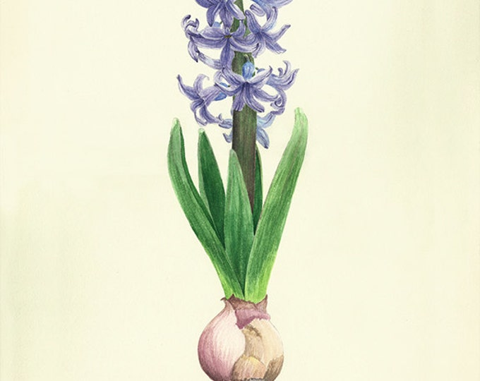 123 Hyacinth Painting card