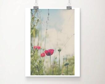 pink poppy photograph pink poppy print pink flower photograph pink flower print neon pink decor english garden photograph