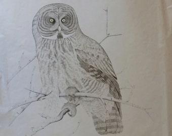 owl print - nature print - owl art - owl artwork - owl art print - owl drawing