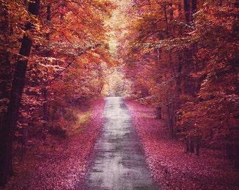 Fall Foliage, Fall Trees Print, Fall Trees Photo, Autumn Trees, Fall Leaves, Fall Road Print, Fall Colors