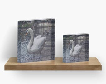 Swan - Acrylic Block - BalazsRomsics 4 x4 / 6 x 6 Home decor