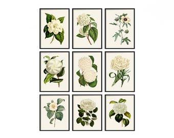 Botanical Print Set of 9 - Poster - Print - Farmhouse Print Set - Farmhouse Decor - Vintage Illustration Print Set - White Vintage Print Art