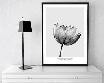 Lotus Print, Botanical Print, Flower Print, Wall Art Print, Black White Print, Black White Art, Botanical Wall Art, Minimalist Print, Prints