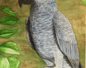 ON SALE PAINTING of Rock E. Bird-African Grey Parrot
