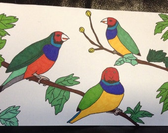 Gouldian Finch Hand Painted Drawing