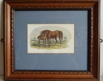Vintage Brood Mare and 3rd Foal Framed Picture