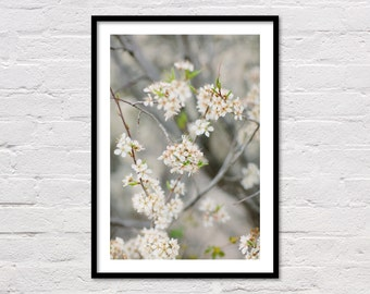 Spring Floral Print, Blossoms, Printable Wall Art, Minimalist Floral Printable, White & Grey Modern Art, Flower Photography, Download Now