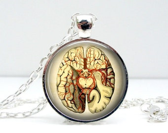 Anatomical Brain Necklace: Glass Picture Pendant Photo Pendant (1150)