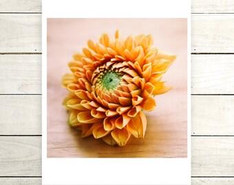 Orange Dahlia Digital Download Fine Art Print 8x8 size, Home Decor, Wall Art, DIY, Printable, Photography, Flowers,