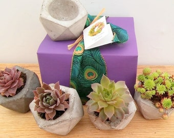 Succulent Concrete Geometric Planter, gift for co-worker,  succulent lover gift,  gift, gift for gardener, gift under 20, college room gift