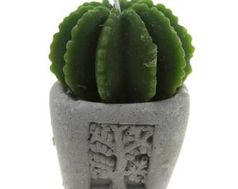 Candle Cactus Garden in mini flower pot