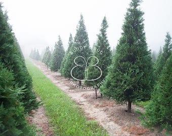 Misty Christmas Tree Farm Digital Background {7 jpgs}