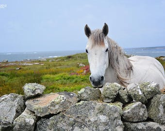 Ireland, Irish, Celtic, St Patricks Day, Connemara Ponies, Rock Walls, Wild Atlantic Way, Gaeltacht, Gaelic, Pink, Sofa Art, Interior Design