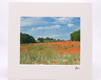 Poppies 2 8x10 Mounted Print