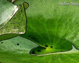 Nature Photography, Water Garden Photos, Water Lily, Green, Garden Art, Wall Art, Home Decor, Monochromatic, Fine Art Photos, Green Wall Art