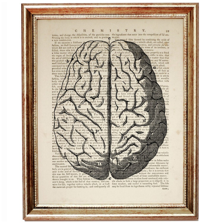 Btain Poster, Anatomy Poster, Anatomy Art, Anatomy Print, Brain Art ...