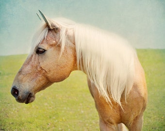 Horse Photograph -Palomino - Horse Portrait - Digital Download - 8x8,12x12,16x16 - Animal photography - Electric JT