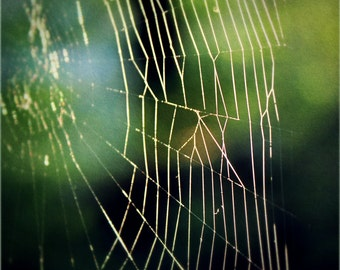 Spider Web 5x5 Photo Fine Art Photography