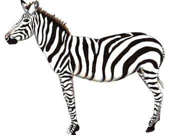 Zebra - Collectible Print