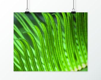Palm Tree, Palm Leaf, Leaf, Palm Tree Print, Palm Leaf Print, Palm Tree Decor, Tropical, Wall Decor, Nature Inspired, Nature Photography