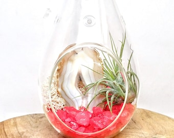 "DIY Agate Slice Crystal Air Plant Terrarium Kit ~ Includes 6.75"" Clear Glass Hanging Terrarium, Crystals, and Tillandsia Plant Gift"