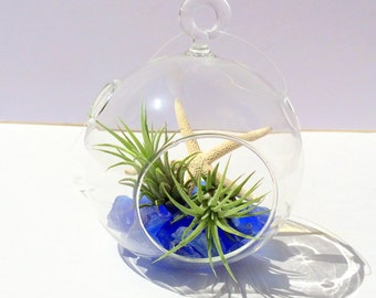Air Plant Wedding Favor Beach Wedding Glass Orb with Cobalt Sea Glass Twine and white starfish