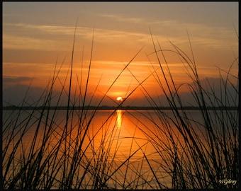 Sunrise  Photography... Saw Grass Sunrise