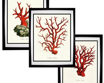 Red Coral Vintage Style Nautical Art Print Set of 3 Natural History Beach House