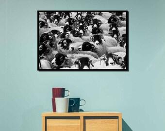 animal photography  , printable wall art , sheep photo , sheep wall art , sheep printable , farm animal wall art
