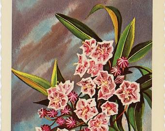 Pennsylvania State Flower - Mountain Laurel Vintage Postcard Signed Artist Ken Haag (unused)