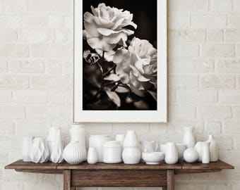 Valentine white rose, wall art, photography , wall decor