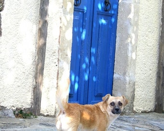 Greece Photography - Dog Blue Door - Greece - Wall Decor - Mediterranean Fine Art Print