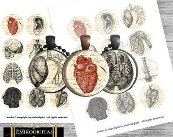 "Vintage Anatomy Bottlecap 2 inches Digital Collage Sheet 8.5""x11"" Jewelry pendants,scrapbooking,magnets,Medicine Digital"