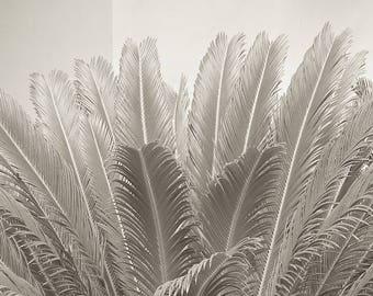 Sepia Prints,Palm Leaf Photography,Palm Print Art Neutral,Tropical Print,Palm Tree Print,Modern Palm Art,Minimalist Art,Fine Art Photography